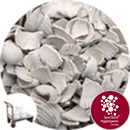 Coloured Sea Shells - Antique White - Click & Collect