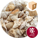 Sea Shells - Assorted Feature Sea Washed