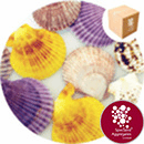 Sea Shells - Natural Carnival Scallop