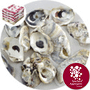 Sea Shells - Natural Oyster