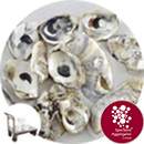 Sea Shells - Natural Oyster - Click & Collect