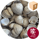 Sea Shells - Natural Whole Cockle