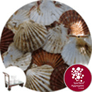 Sea Shells - Scallop Cups and Flats - Click & Collect