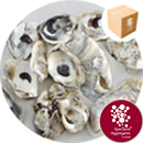 pH Correction Media - Natural Oyster Shells