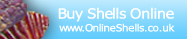 Shell Shop - Buy Sea Shells Online